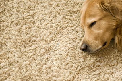 Teppich Fußbodenheizung ~ Teppich auf fußbodenheizung geht das gut die fördetherm