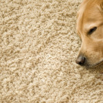 Welchen Bodenbelag für die Fußbodenheizung?