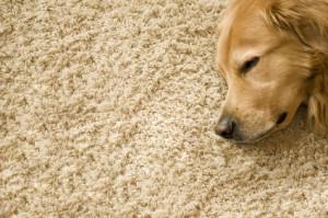 Fußbodenheizung Teppich