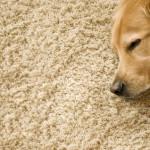 Teppich auf Fußbodenheizung – geht das gut?